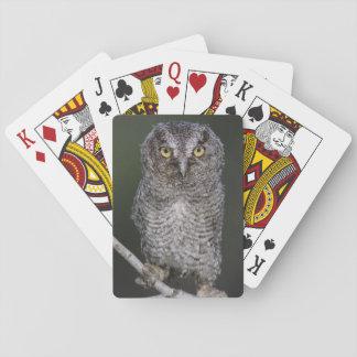 Eastern Screech-Owl, Megascops asio, Otus 2 Playing Cards