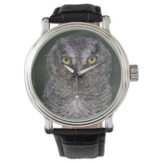 Eastern Screech-Owl, Megascops asio, Otus 2 Watch
