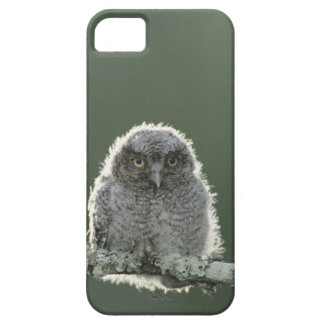 Eastern Screech-Owl, Megascops asio, Otus 3 iPhone 5 Cover