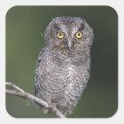 Eastern Screech-Owl, Megascops asio, Otus Square Sticker