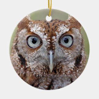 Eastern Screech Owl Photograph Ornament