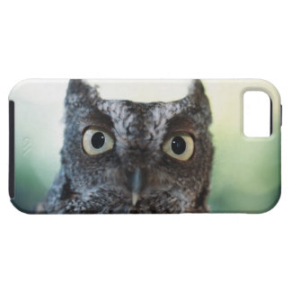 Eastern Screech Owl Portrait Showing Large Eyes iPhone 5 Cases