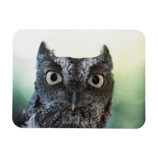 Eastern Screech Owl Portrait Showing Large Eyes Rectangular Photo Magnet