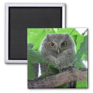 Eastern Screech Owl Square Magnet