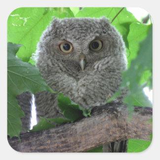 Eastern Screech Owl Square Sticker