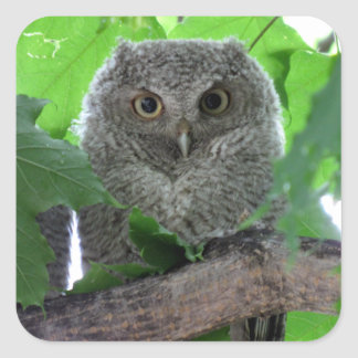 Eastern Screech Owl Square Sticker