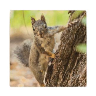 Eastern Sierra Nevada Maple Wood Coaster