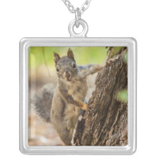 Eastern Sierra Nevada Silver Plated Necklace