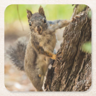 Eastern Sierra Nevada Square Paper Coaster