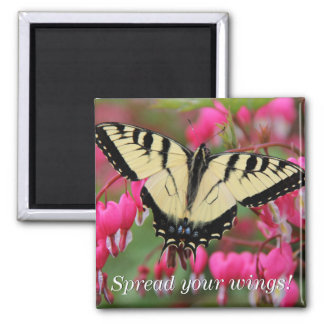 Eastern Swallowtail 2 2 Inch Square Magnet