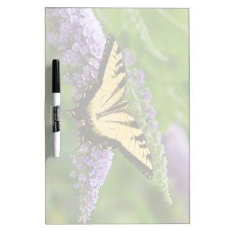 Eastern Tiger Swallowtail butterfly Dry Erase Whiteboards