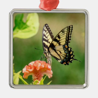Eastern Tiger Swallowtail Butterfly Silver-Colored Square Decoration