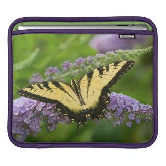 Eastern Tiger Swallowtail butterfly Sleeves For iPads