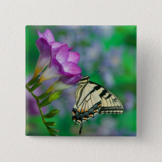 Eastern Tiger Swallowtail on Fresia - Sammamish 15 Cm Square Badge