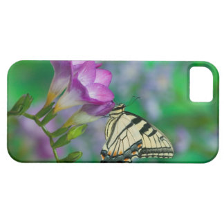 Eastern Tiger Swallowtail on Fresia - Sammamish Barely There iPhone 5 Case