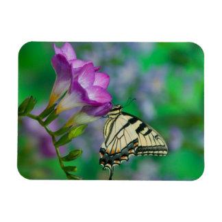 Eastern Tiger Swallowtail on Fresia - Sammamish Rectangular Photo Magnet