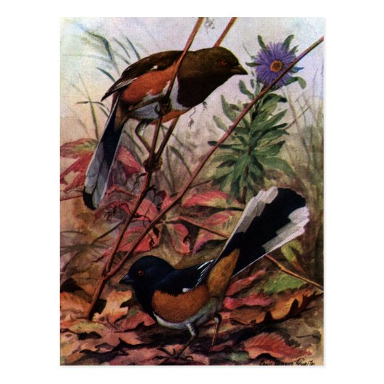 Eastern Towhees and Purple Aster Postcard