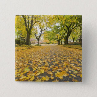 Eastmoreland In Autumn road and tree view 15 Cm Square Badge