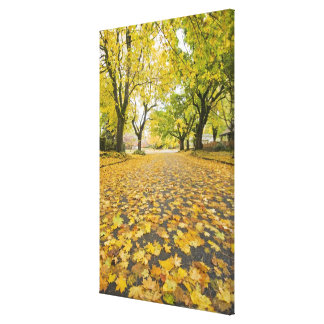Eastmoreland In Autumn road and tree view Canvas Print