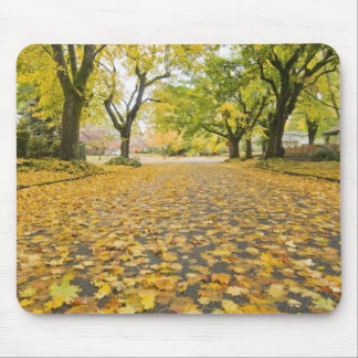 Eastmoreland In Autumn road and tree view Mouse Mat