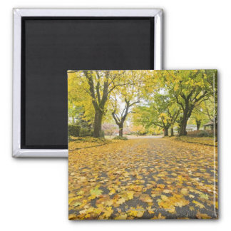 Eastmoreland In Autumn road and tree view Square Magnet
