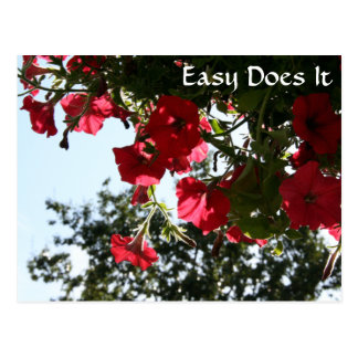 Easy Does It - Scarlett morning glories Postcard