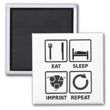 Eat, sleep, imprint, repeat magnet