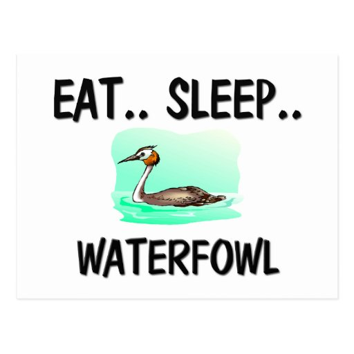Eat Sleep WATERFOWL Postcards