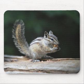 Eating Chipmunk Mouse Pad