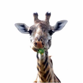 eating giraffe standing photo sculpture