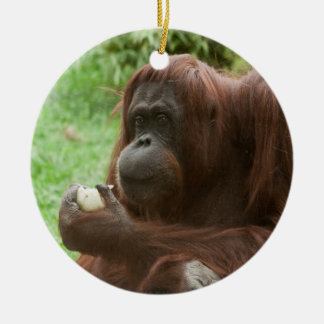Eating Orangutan Round Ceramic Decoration