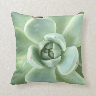 Echeveria Succulent Cushion