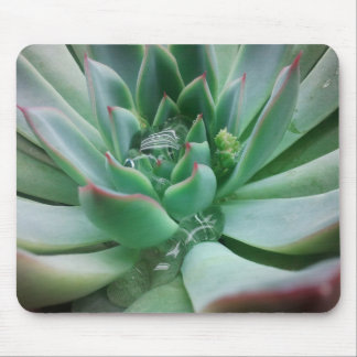 Echeveria 'Tippy' Mouse Mat