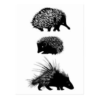 Echidna, hedgehog, porcupine postcards