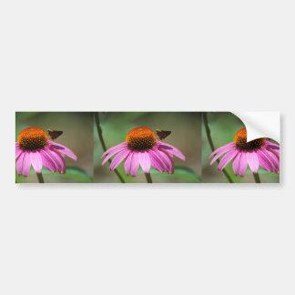 Echinacea Bumper Stickers