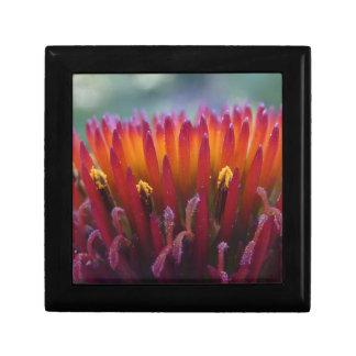 Echinacea gift box