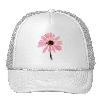 Echinacea purpurea mesh hats