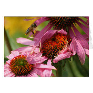 Echinacea with Bee Card