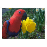 Eclectus Daffodil -- Large Greeting Card