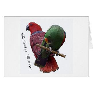 Eclectus Parrot 1 3D Card