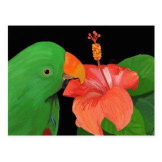 Eclectus Parrot and Hibiscus Flower Postcard