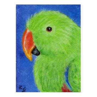 Eclectus Parrot Postcard