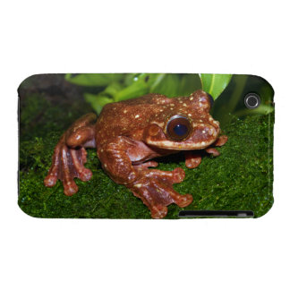 Ecnomiohyla Rabborum Rabbs Fringe Limbed Tree Frog iPhone 3 Covers