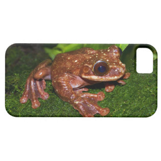 Ecnomiohyla Rabborum Rabbs Fringe Limbed Tree Frog iPhone 5 Case