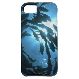 Ecuador, Galapagos archipelago, Wolf Island, Case For The iPhone 5