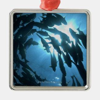 Ecuador, Galapagos archipelago, Wolf Island, Christmas Ornament
