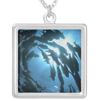 Ecuador, Galapagos archipelago, Wolf Island, Silver Plated Necklace