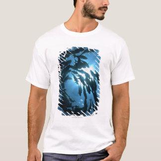 Ecuador, Galapagos archipelago, Wolf Island, T-Shirt