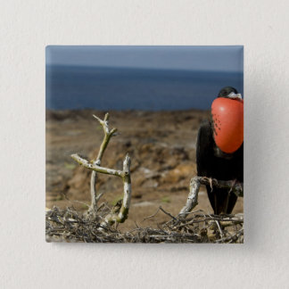 Ecuador, Galapagos, Genovesa Island. Prince 15 Cm Square Badge