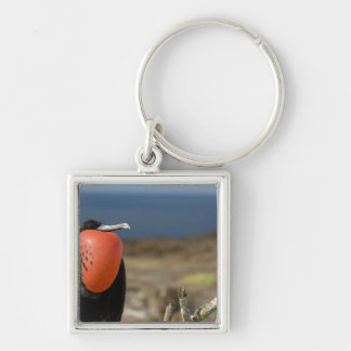 Ecuador, Galapagos, Genovesa Island. Prince Key Ring